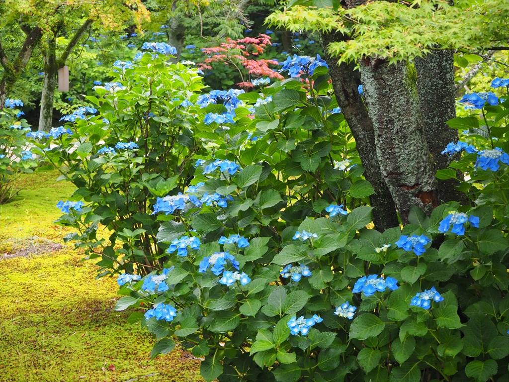 勧修寺 様々な花が咲く華やかな境内